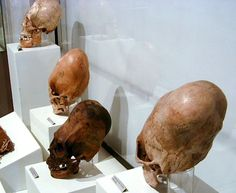 New DNA tests on 2,000-year-old Elongated Paracas Skulls CHANGES HISTORY