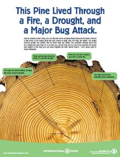 "This is just one poster available from International Paper in their ""Life of the Forest"" educational program.  Download all of the posters/handouts from this site.  They are great forestry resources for kids."