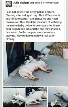 Disgusting!! We can't let this keep happening. Just a warning to all... aim a gun at my dog and I will have one aimed at your head!