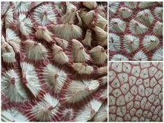 Tie Dye Techniques, Shibori Tie Dye, Painted Clothes, Fabulous Fabrics, How To Dye Fabric, Tye Dye, Fabric Painting, Textiles, Textile Art