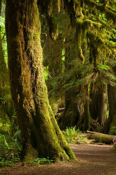 Hoh Rainforest, Washington. One week and I'll be here!