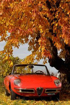 1969 Alfa Romeo Duetto 1750 Spider Veloce