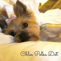 Chloe resting :)
