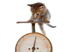 7 Steps to Increase Weight on a Cat