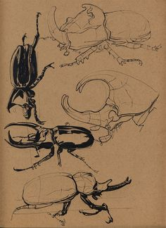 Insects by Floris van der Peet on ArtStation.