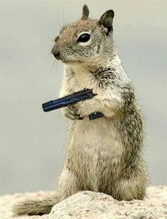 Army Squirrels With Guns