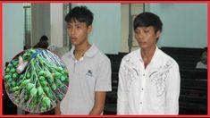 Bi hài chuyện 2 thanh niên đi tù vì 'mua'… 6 buồng cau