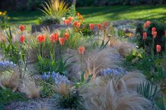 designing with flower bulbs, with chanticleer's lisa roper - A Way To Garden