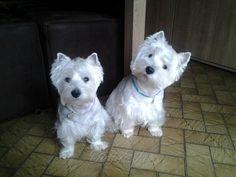 Two cuties