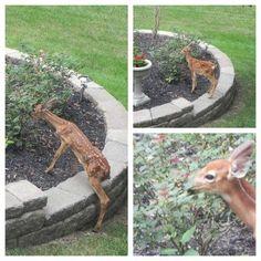How I Saved my Garden - Best Deer Deterrent Ever!