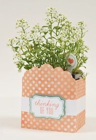 Thinking of you plant box- isn't this a great spring gift idea, or for Easter!