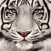 White Tiger Painting Art Print