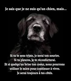 If you feel sad, i will be yout smile. If you cry, i will confort you. And if someone hurts your heart, we can use mine to carry on with life. Japanese Dog Breeds, Japanese Dogs, Ewok, Mans Best Friend, Best Friends, Animals And Pets, Cute Animals, Amor Animal, Cute Dogs Breeds