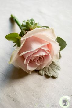 Blush pink Rose buttonhole with mini succulent and senecio grey foliage