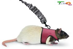 Harness Hamster Ferret Halter Small Pets Supplies Comfort 4-Feet Leash Exercise #SuperPet
