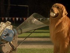 Screencap Gallery for Air Bud: Seventh Inning Fetch (2002) (480p DVD, Air Bud / Buddies, Disney Live-Action). Josh is off to his first year of college and Buddy has stayed behind with Josh's little sister, Andrea and the rest of the family. Andrea, attempting to fi