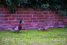 Silent Sunday 26/04/2015   cnyanyophotography.blogspot.co.uk
