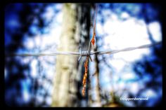 Happy Barbed Wire Wednesday #Photography