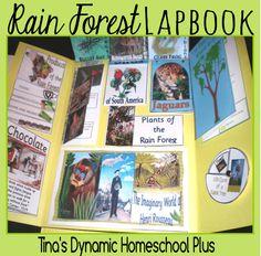 Rain Forest lap books, facts, ideas of what to study and more! Rainforest Classroom, Rainforest Project, Rainforest Theme, Rainforest Animals, Amazon Rainforest, What To Study, Ocean Unit, Glass Frog, Biomes
