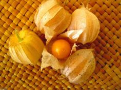 Giant Poha Berry,Cape Gooseberry,500 SEEDS (Physalis Peruviana) ,Ground Cherry