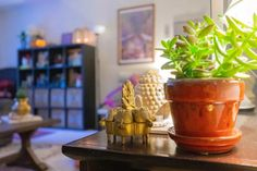 Affinity for antiques home tour of Rushika & Dipkal's – the collection of succul… – Indian Living Rooms