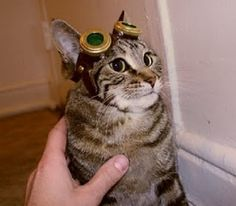 Steampunk kitty- don't think my son would dare put his steampunk goggles on our cat