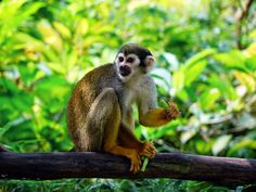 #animal #animal photography #blur #blurry #close up #eating #fur #leaves #log #mammal #monkey #nature #tree trunk #wild animal #wilderness #wildlife