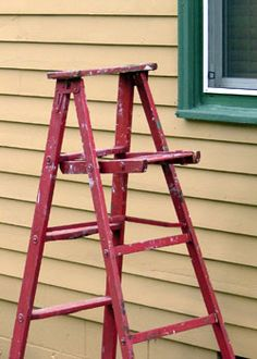 Old ladders as trellises too!