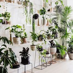 indoor garden decor The Plant Room / The Design Files Room With Plants, House Plants Decor, Plant Decor, Plant Rooms, Big Plants, Green Plants, Hanging Plants, Indoor Plants, Indoor Gardening