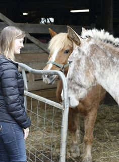 Saying hello to the horse and the mule at Woodcrest Farm. Horses, Animals, Animales, Animaux, Horse, Words, Animal, Animais