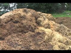 "Small Farm Manure Management - spread it daily onto  ""rotated yearly"" gardens.  Grow in one side one year while building up the other garden for the following year."