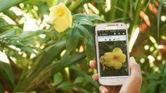 Plantnet: il dizionario botanico a portata di clic