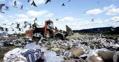 More than one-third of all food produced globally is wasted or spoiled. How can the average person do his or her part?
