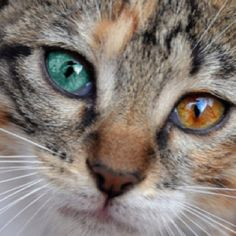 MULTI colored eyes on animals