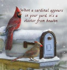When a cardinal appears in your yard, it's a visitor from heaven. I've had a lot of visitors lately. Signs From Heaven, Miss My Mom, Beautiful Birds, Beautiful Things, In This World, Favorite Quotes, First Love, Cute Animals, Inspirational Quotes