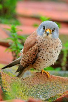 Precious Bird