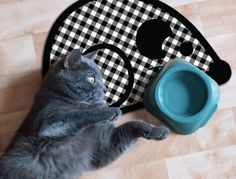 Bobby & Milk Pet Collection by A&A Story: MOUSE 5'' BOWLS : 12.7''x19'' or 7'' BOWLS : 15.5''x23'' Cat Lover Gifts, Cat Gifts, Cat Lovers, 5 S, Bobby, Milk, Collection