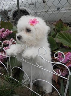 So so cute I want one!!!!!