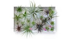 Airplantman's official home, shop for the AirplantFrame vertical garden and view custom projects and press