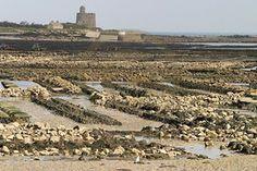 Saint Vaast La Hougue à marée basse. L'ostréiculture représente une activité riche dans tout ce secteur. Cela fait oublier que ce port était le tableau de nombreux combats maritimes en d'autres temps.