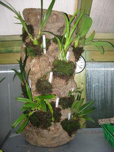 Orquídeas Blog de Angel Mar: agosto 2012