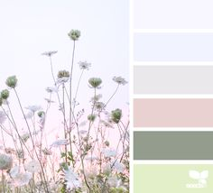 { color field } image via: @lisaridgelyphotography