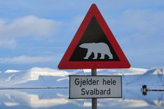 Life in Longyearbyen in the Norwegian Arctic archipelago of Spitsbergen isn't too stressful, but you DO have to worry about the wildlife. Longyearbyen, Polar Bear Logo, Polar Bears, Schengen Area, Svalbard Norway, Sign Fonts, Polar Night, Bear Signs, Curious Facts