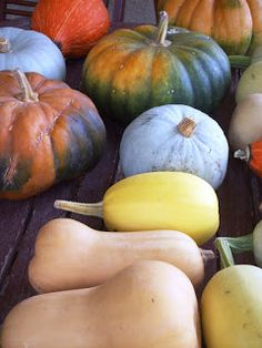 Squash - enough for the winter and to share.