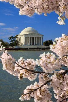Jefferson Memorial Cherry Trees, Washington, D.C.