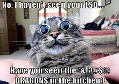 No, i havent seen your lsd - Have you seen the dragons in the kitchen? ~ Funny memes, rage comics