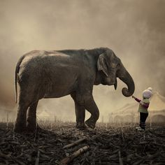 """/ Photo """"Stop it, you tickled me"""" by Caras Ionut Animals For Kids, Cute Animals, Elephants Never Forget, English Fun, Photoshop, Elephant Love, Photo Manipulation, Wonders Of The World, Mammals"""