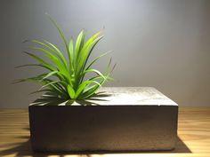 Vaso de concreto, projetado é executado por dona mi. Super antenado e descolado para seu ambiente. Vc encontra na dona mi Siga nosso insta @dona_mi