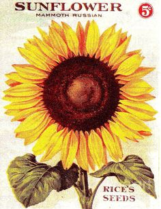 Sunflower seed packet poster
