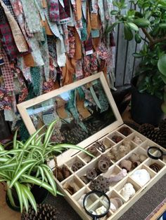 "Nature items to explore, presented as beautifully as ever by Puzzles Family Day Care ("",)"